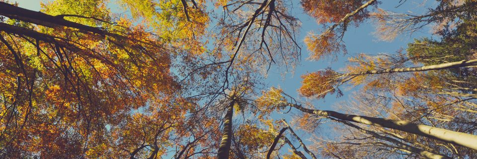 Taille d'arbres, constructions en bois